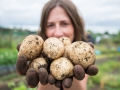 Proud spud grower